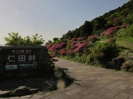 雲仙ヒカゲツツジ 1980-01-01 123