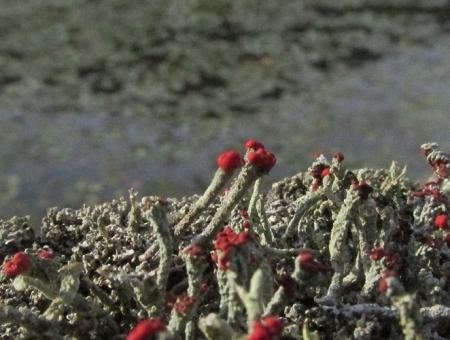 九年庵と金立公園のトンボ 1980-01-01 194