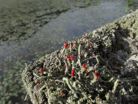 九年庵と金立公園のトンボ 1980-01-01 192