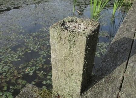 九年庵と金立公園のトンボ 1980-01-01 191