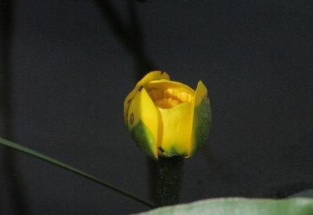 九年庵と金立公園のトンボ 1980-01-01 103