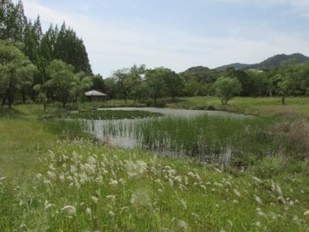 九年庵と金立公園のトンボ 1980-01-01 091