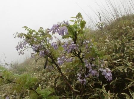 霧の天山 1980-01-01 109