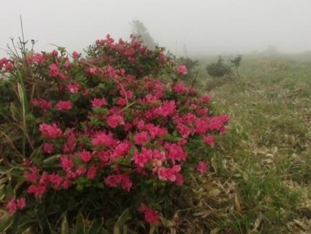 霧の天山 1980-01-01 148