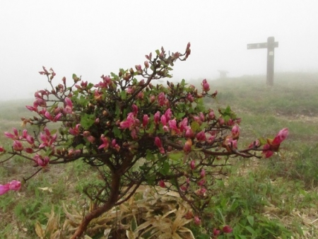 霧の天山 1980-01-01 181