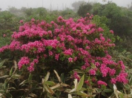 霧の天山 1980-01-01 153