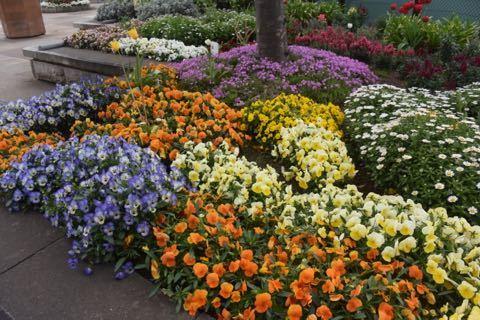 花でいっぱい