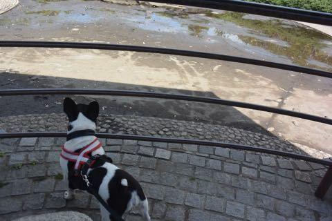 いつもの公園の池