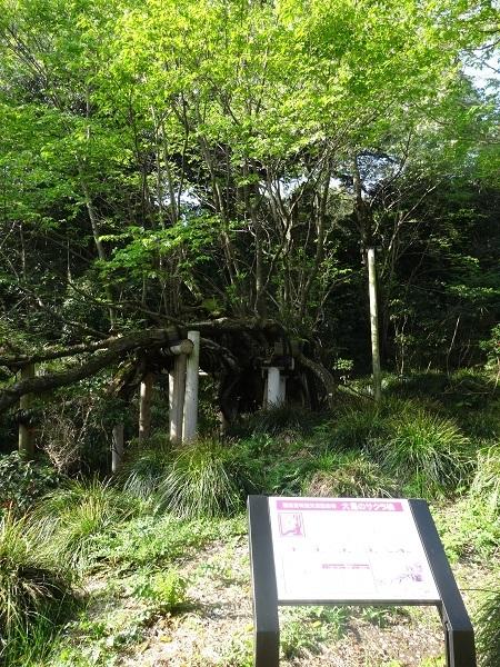 180331大島 ソノ1(23)