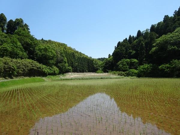 180505秋元牧場 (5)