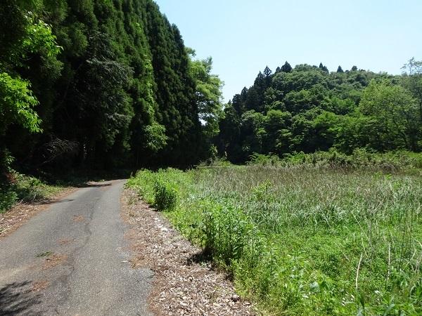 180505秋元牧場 (6)