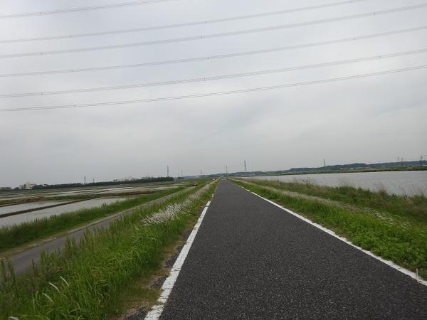 20180512印旛沼 (1)