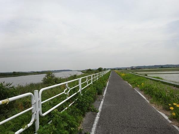 20180512印旛沼 (4)