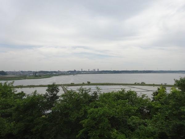 20180512印旛沼 (8)