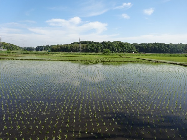 20180512印旛沼 (14)