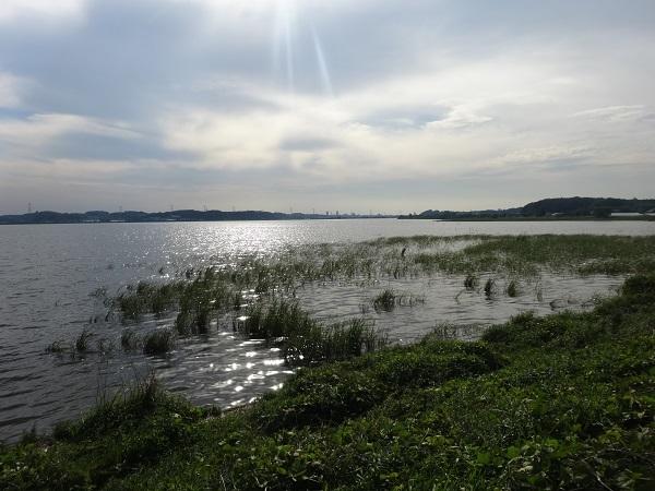 20180512印旛沼 (15)