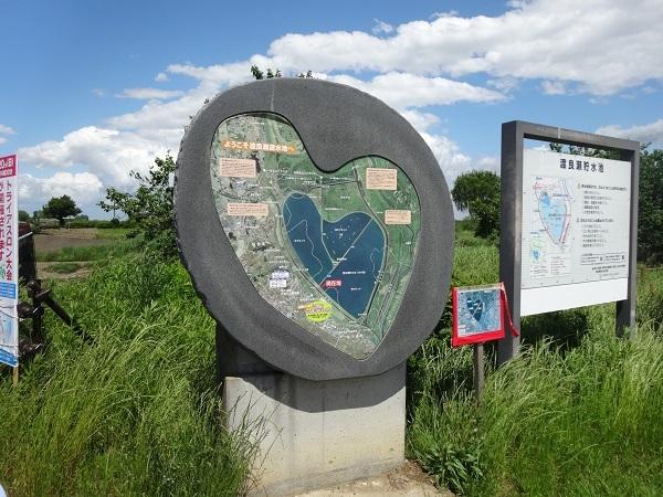180519渡良瀬遊水地 (23)