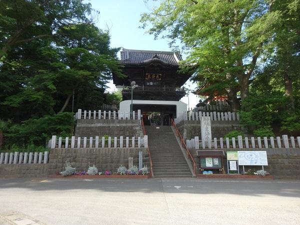 180519渡良瀬遊水地 (29)