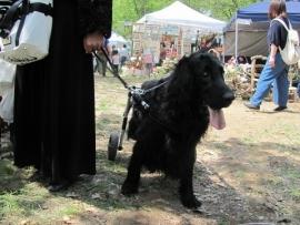 車いすの大型犬IMG_7780