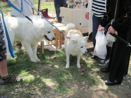 大型犬とせんべいIMG_7781