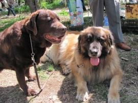 大型犬IMG_7773