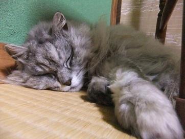 二階で睡眠み~