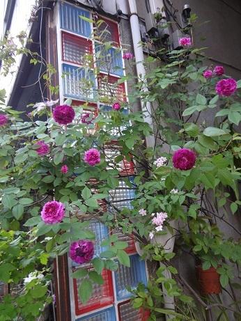 色ガラスブロックと薔薇