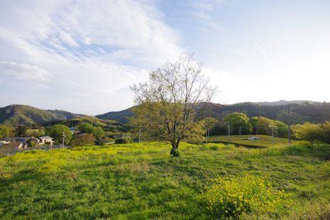 エノキの丘
