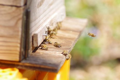 ニホンミツバチ研修1