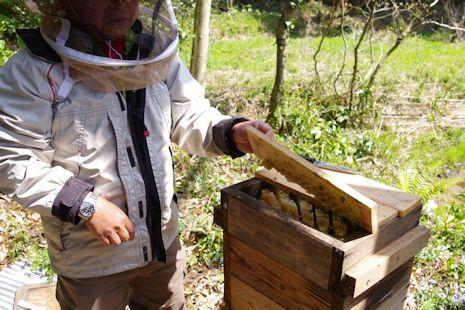 ニホンミツバチ研修3