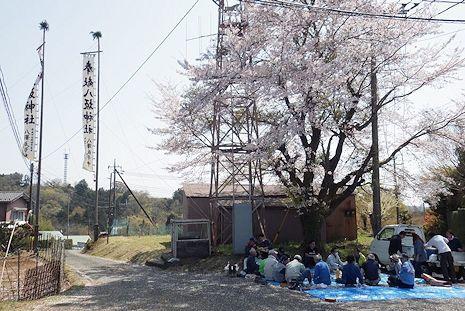桜の下で宴会1