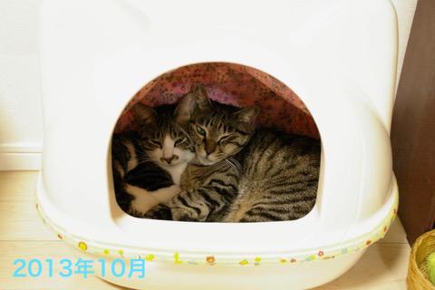 180510-2sayataiga201310
