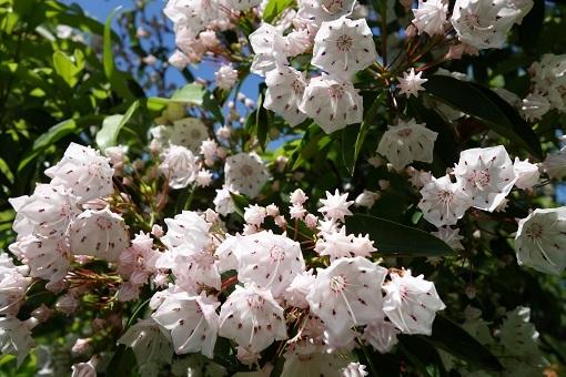 すっかり花の季節