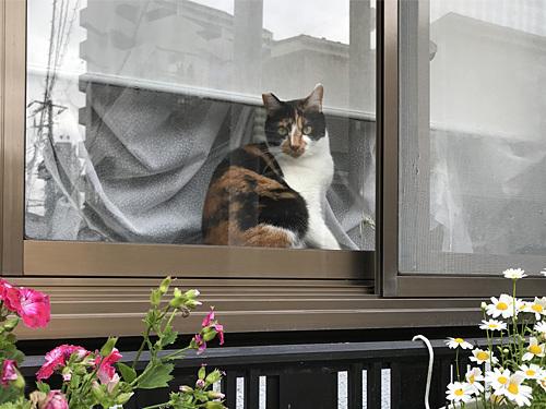 180425 猫2