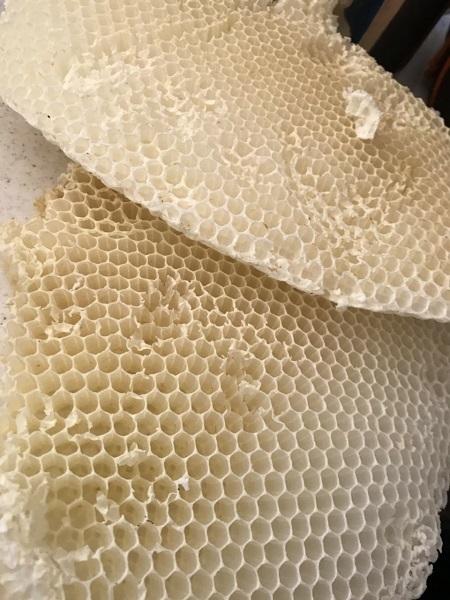 2018.05蜂の巣