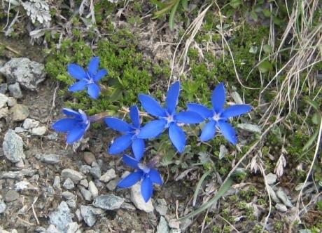 リッフエル湖の花①
