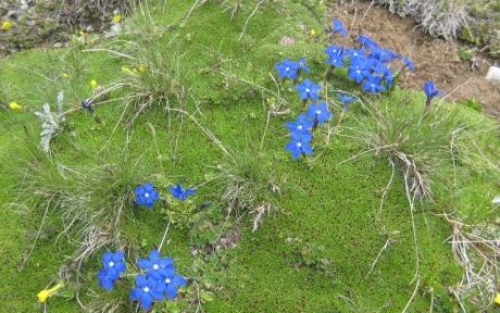 リッフエル湖の花③