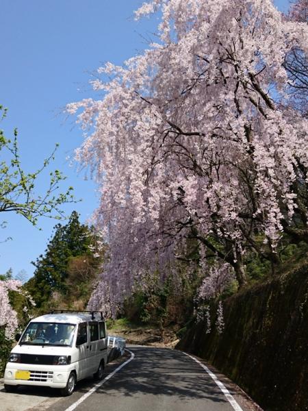 枝垂桜となんちゃって号