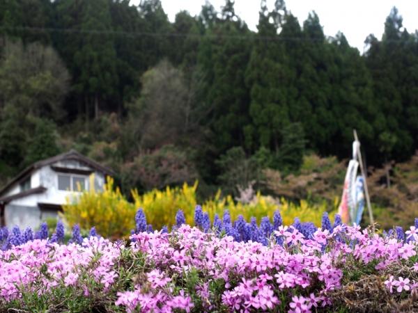 里山の春02