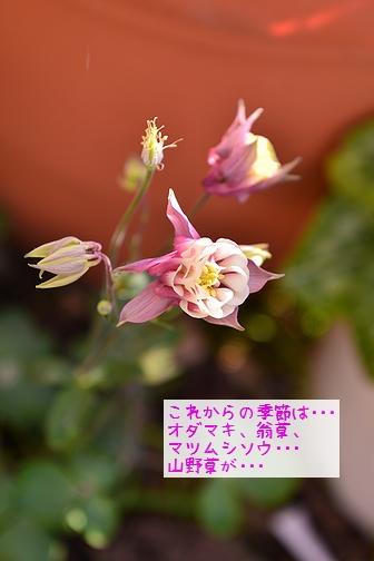 180401_5177.jpg