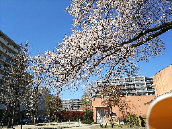 桜の枝が…