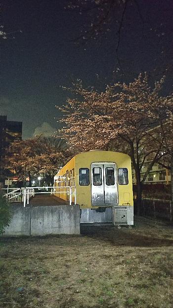 夜桜と電車図書館