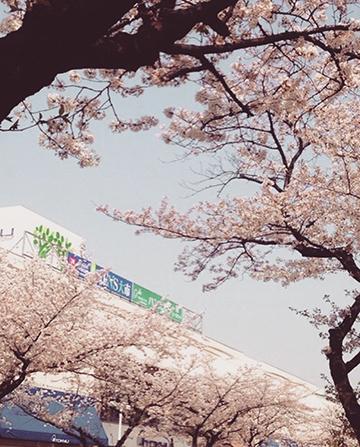 IMG_1237桜東急360x