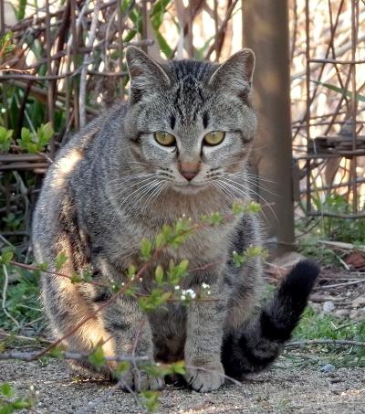 180414-野良猫さん-1