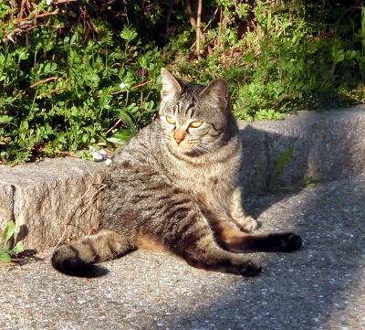 180414-野良猫さん-2