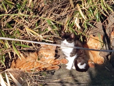 180414-野良猫さん-3