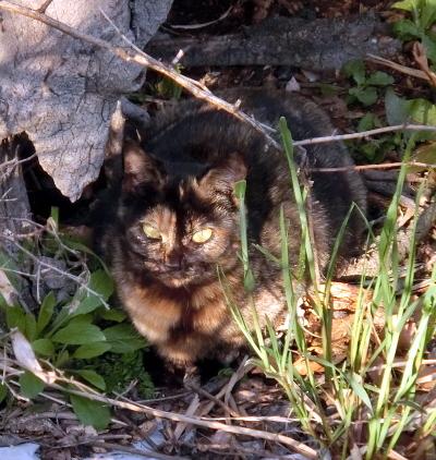 180414-野良猫さん-5