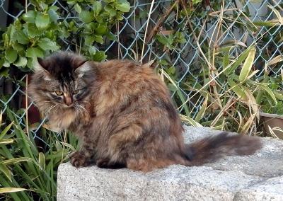 180505-野良猫さん-2