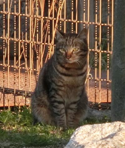 180505-野良猫さん-3