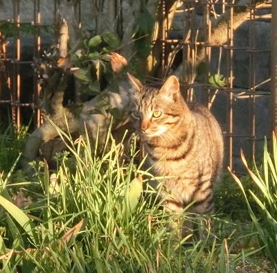 180505-野良猫さん-4